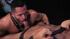 Tanned Dude In Leather Straps Gets To Pound His Lover's Firm Ass